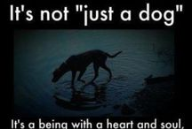 Not 'Just a Dog' / Dogs are the only creature on earth who will love you more than they love themselves. Those are not the qualities of 'just a dog.' It's more than you can say for 'just a human.'