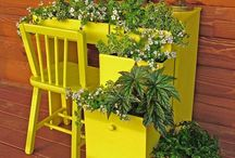 Plants&gardening