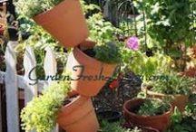Yrtti-istutukset - Herb plantings