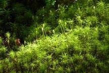 Natures: seasonal beauty / 美しい自然の季節の彩りを…田園や里山、国立公園