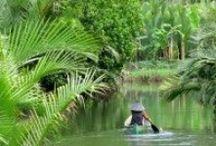 Indonesië / Reistips en inspiratie voor Indonesië: van orang-oetans en olifanten in Sumatra; tot snorkelen en stranden op Godeneiland Bali. Ieder eiland van Indonesië is weer anders!