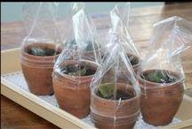 Kasvien lisääminen - Plant propagation