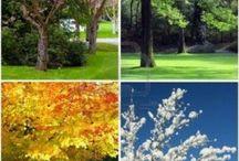 4 seasons / 4 seasons
