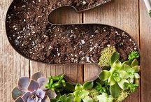 GARDENING / Flowers/herbs/veggies