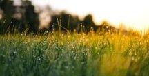 NATURAL GARDEN / Pas de pesticides, pas d'herbicides, pas de trucs en -cide en fait : Groww prône une façon de jardiner respectueuse.
