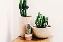 + Plantlife