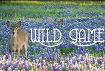 Wild Game & Foraging  / Share your wild game pins. Please no spam or nudity!