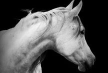 For the Love of Horses / Can't get enough of beautiful horses! *smile*