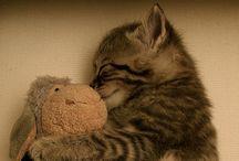 Hello Kitty!!