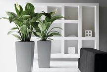 Irodai növénydekoráció / A Fitoland egyik fő tevékenysége rendezvények, irodaházak, intézmények, éttermek élő növényekkel való feldíszítése.   Ebben a Pinterest galériában olyan irodai dekorációs ötleteket gyűjtöttünk, ami bárki számára meghozza a kedvet arra, hogy szó szerint élőbb legyen az a hely, ahol naponta 8-10 órát eltölt!   Növénydekorációs szolgáltatásunk: http://www.fitoland.hu/novenydekoracio