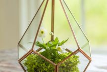 Terrarium Inspiration / There's no better way to add a little life in your home than to create your own terrarium