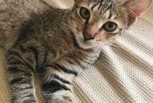 Cats/Kucing/ねこ