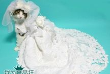 Purrrfectly Blissful / Cat Wedding!