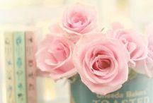 Allons voir si la rose... / Rose pastel, rose poudré, rose bonbon, rose romantique...rose rose! Pink rose.