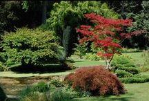 ❀♣ Jardins japonais ♣❀ /  Le Japon s'invite souvent dans les espaces verts de France, et cela pour notre plus grand plaisir.