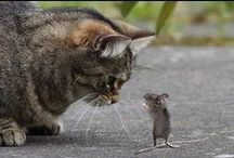 Chats et Souris ~ Cats and Mice