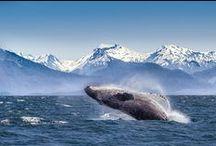 Go to Alaska ✈