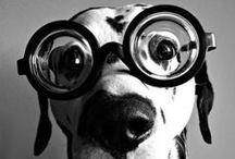 Animal Eye Sight