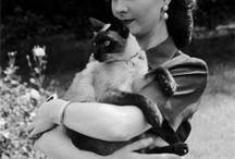 Animals: pets / Cats: turkish angora, persian angora (half-persian), chinchilla, siamese... Dogs: xolo...