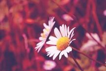 Spring on Momentage / Photography & Flowers / by Momentage App
