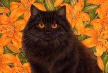Black Cats & Pointy Hats )0(