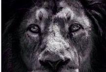Lion of the Zodiac