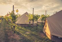 Wildernest Events & Festivals / From Corporate Events to New Zealand's best summer festivals. Wildernest produce boutique custom-designed events in remote locations. We provide everything you need to create an inspiring experience!