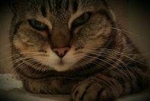 Pina / Cats