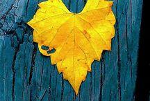 { Stagioni } Blu autunno