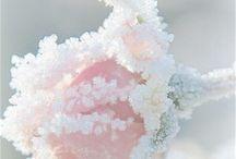 { Stagioni } Rosa inverno