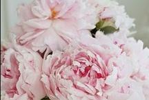 Flowers / by Christine Lamb