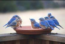 bird love / by Roseanne A