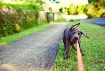 {pet photography} / by Amy Paradise