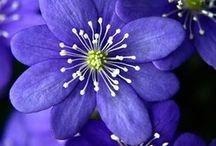 Flower / by Sinta Polla
