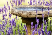 Gardening Ideas / Things I would like to try doing and making in our garden
