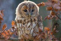 OWLS / My Spirit Animal!!