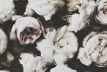 flora ~ / Wedding florals that inspire us.