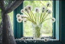 Dandelion Stuff / Dandelion love!