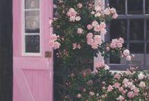 Garden / by Sandra