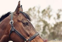 Equestrianism / Equine love <3