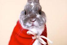 Rabbits / ~Rabbits, rabbit hutches, DIY, rabbit runs, breeding, treats  ~Chooks & chickens