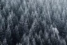 Trees / Parce que l'arbre est le plus beau des emblèmes... #timberland