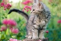 We ♥ Cats! / Cute kitty pics, and inspiring stories about fantastic felines!