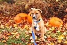 Pet Care Tips / Simple tips on how to making caring for your pet just a little bit easier!