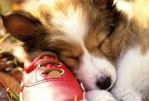 Dogs and Cats! / The cutest dog and cat photos from around the internet!