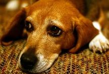 Sick Dogs / Having sick pets is not fun. Check out this board for treatment tips and products.