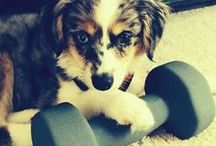 Pet Training / Check out these posts from the PetPlus blog to get some helpful training tips.