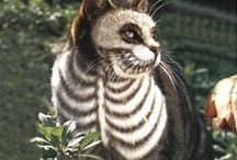 Spooky Pets / Halloween costumes, pets dressed up, fun pictures