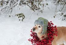 Holiday Pets / Photos of pets who are ready for the holidays!