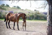 Nuestra ganadería - Our stud / Fotos variadas de la Yeguada. Random pictures of the stud